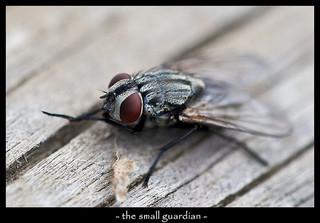 Krenglbach und seine Fliegen