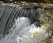 Umwelt und Natur in Krenglbach